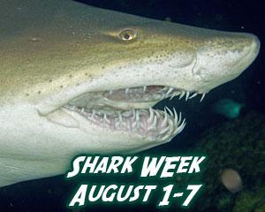 Aug. 1-7 Is Shark Week