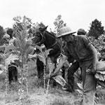 World War II tobacco feilds