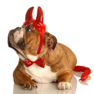 dog in a devil costume